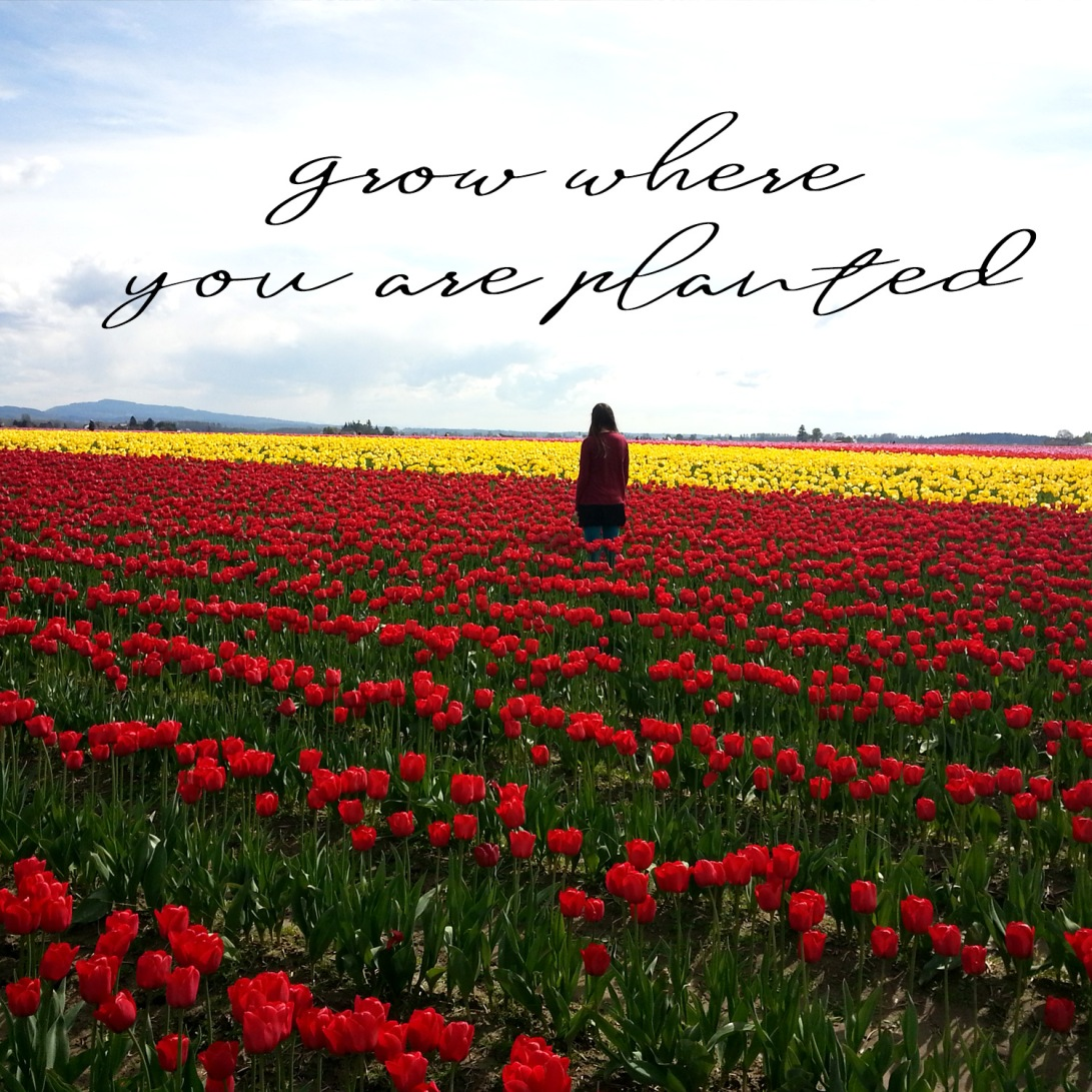 grow-where-you-are-planted