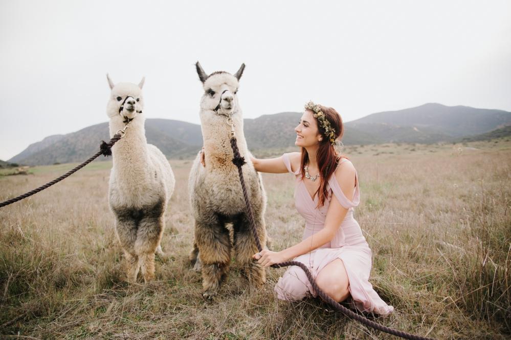 Alpacas with the Bride