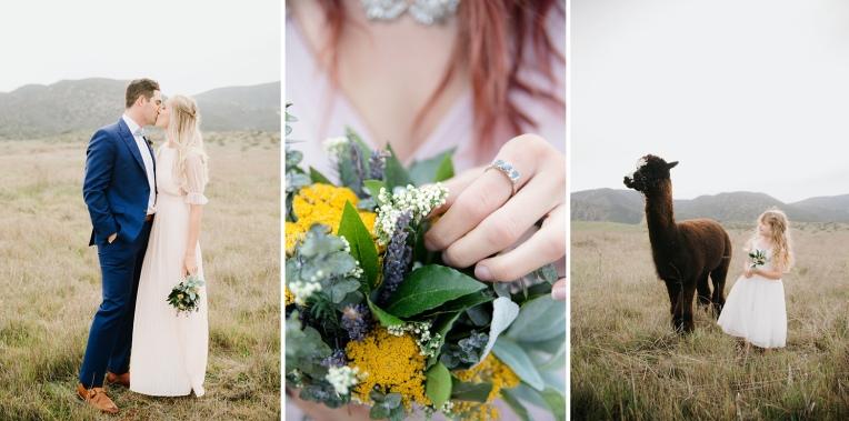 Wedding with Alpacas